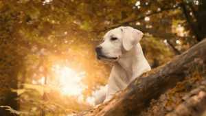 En Güzel köpek resimleri 25