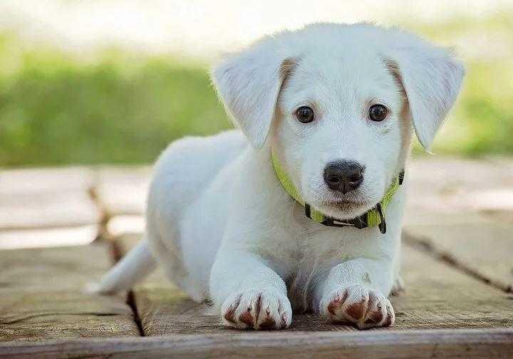 Yavru Köpek Nasıl Eğitilir