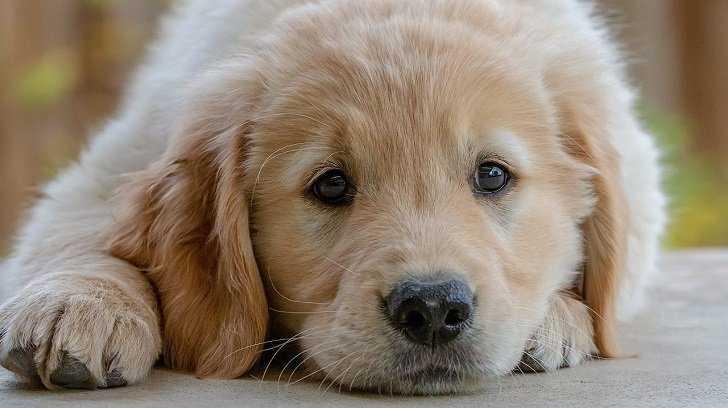 Köpeğinize Eğitim Verirken İstikrarlı Olun