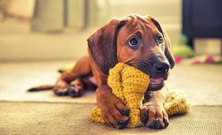 köpeklerde ödül ve ceza