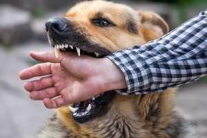 köpeklerde ısırma