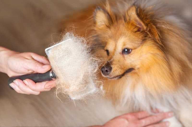Köpekler Neden Tüy Döker? Nasıl Tedavi Edilir?