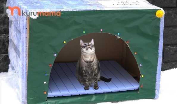 kedi evi nasıl yapılır