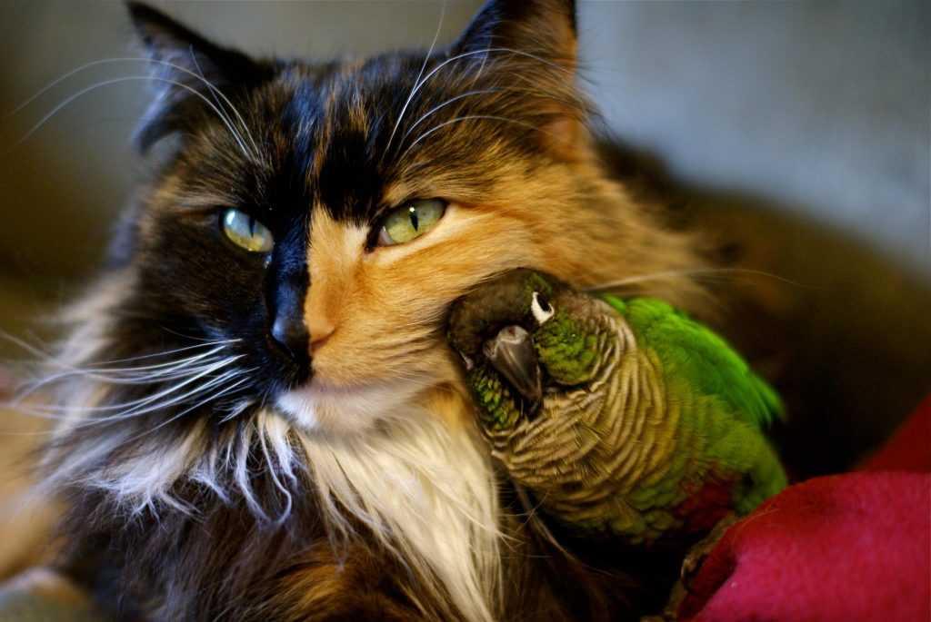 kedi ve kuş aynı evde yaşayabilir mi