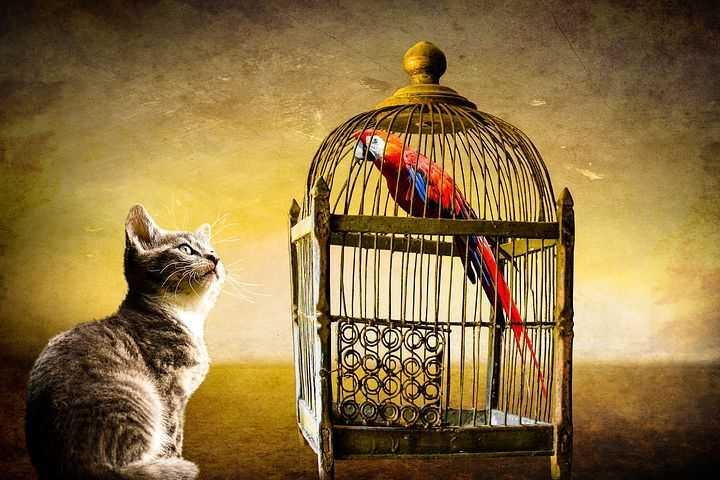 Kedi ile Kuş Aynı Evde Yaşayabilir Mi?