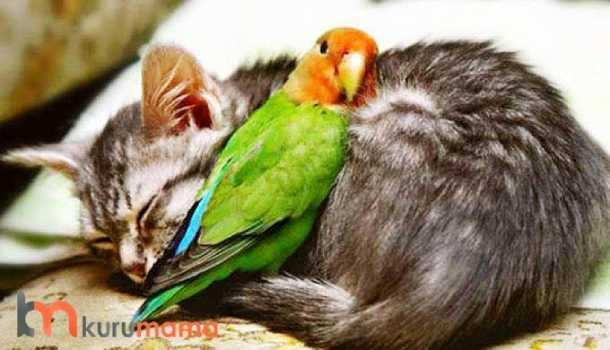 kedi ve kuş aynı evde
