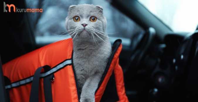 kediler için aksesuar seçimi