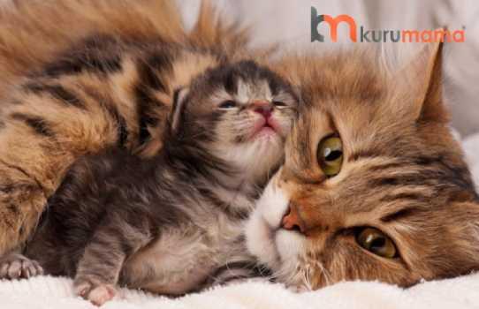 kedilerde doğum