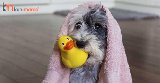 köpekler nasıl temizlenir