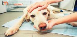 köpeklerde kanser belirtileri