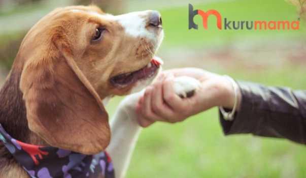köpeklerde ödüllendirme