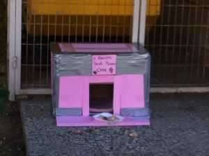 Sokak Kedileri İçin Kedi Evi Nasıl Yapılır ?