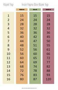 köpeklerin yaşı nasıl hesaplanır
