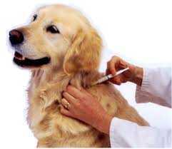 köpeklerde aşı