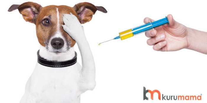 köpek aşıları
