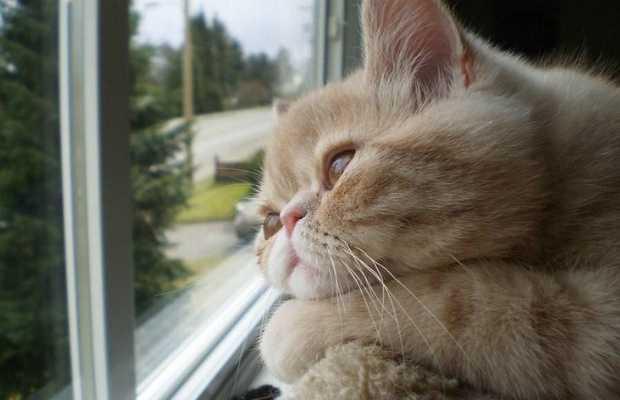 Kedilerde Psikolojik Sorunlar Nedir? Nasıl Tedavi Edilir?