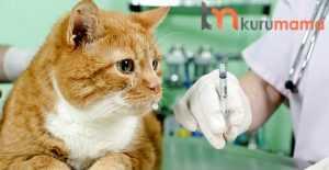 kedilere yaptırılması gereken aşılar
