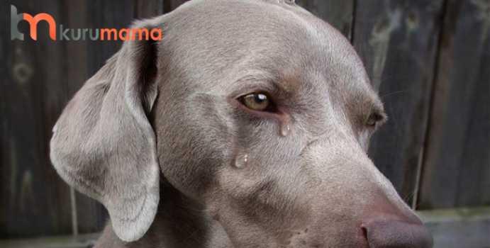 köpekler neden ağlar