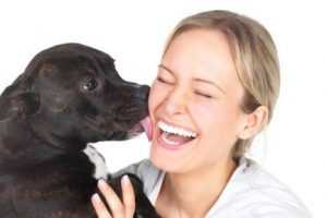 köpekler neden yalanır