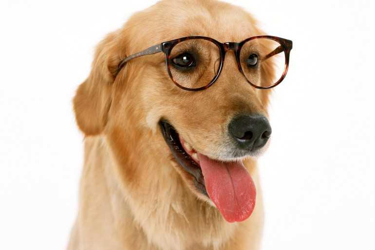 Köpekler Renk Körü Müdür?