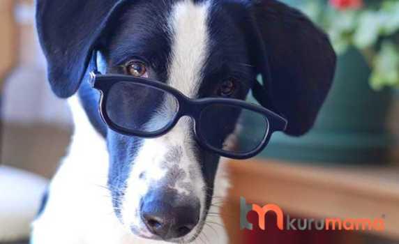köpeklerde renk körlüğü