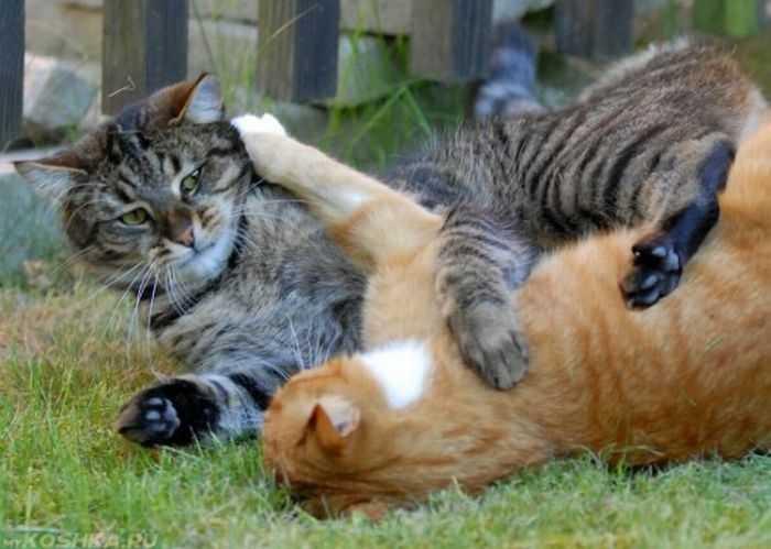 Kedileri Birbirine Alıştırmak İçin Ne Yapılmalıdır?