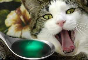 kedilerde ilaç kullanımı