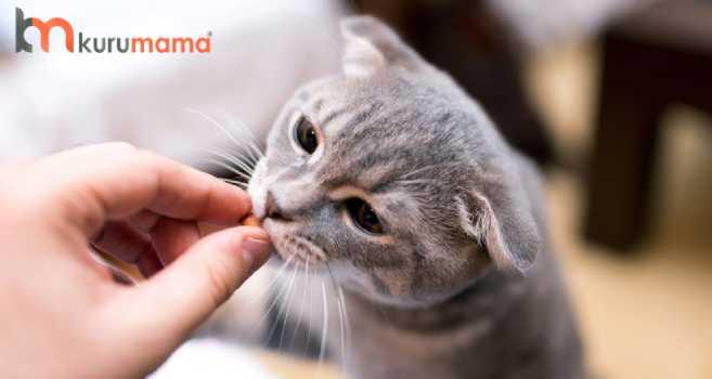 kedilere ilaç içirmek