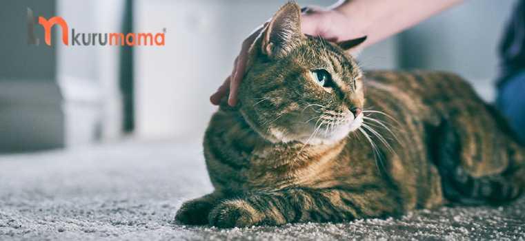 kedilerin sevgisini gösterme yöntemi