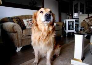 apartmanda köpek bakmak yasak mı
