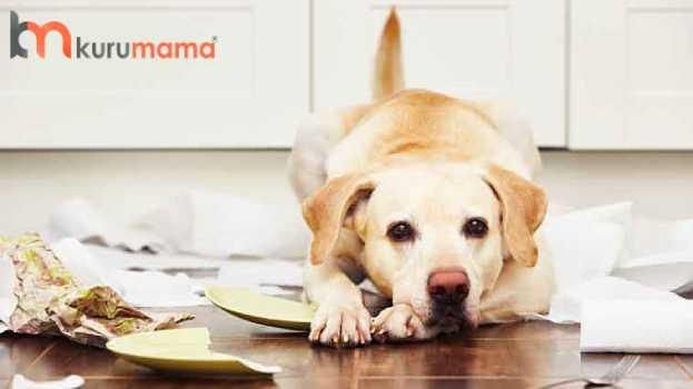 köpeklerde stres