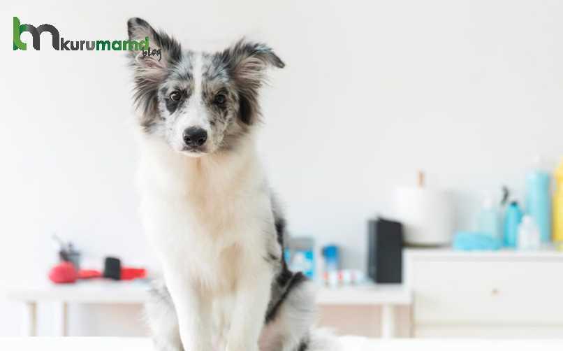Evde ishal köpek bakımı