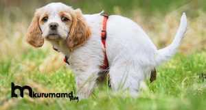 Köpeklerde İshal Nedir