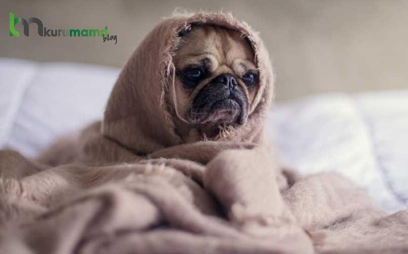 Köpekler neden ishal olur