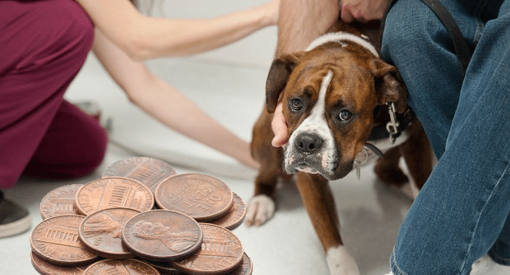 köpeklerde stres yaratan durumlar
