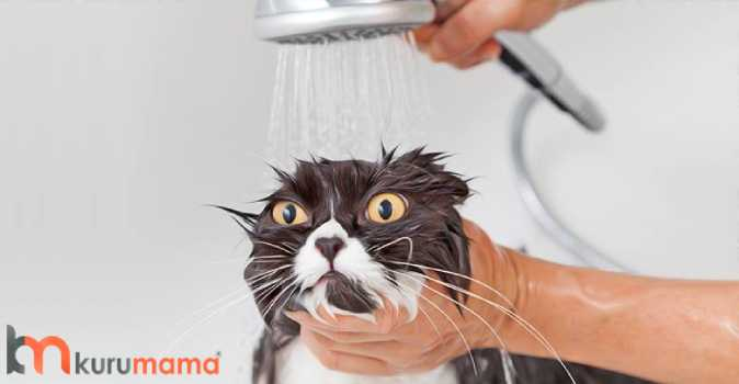 kedilerin tüy dökmemesi için yapılması gerekenler