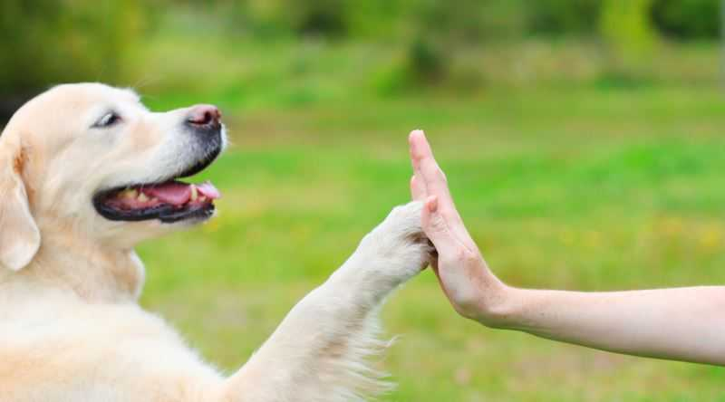 yavru köpeklere isim nasıl öğretilir