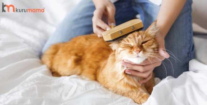 kedilere vakit ayırın