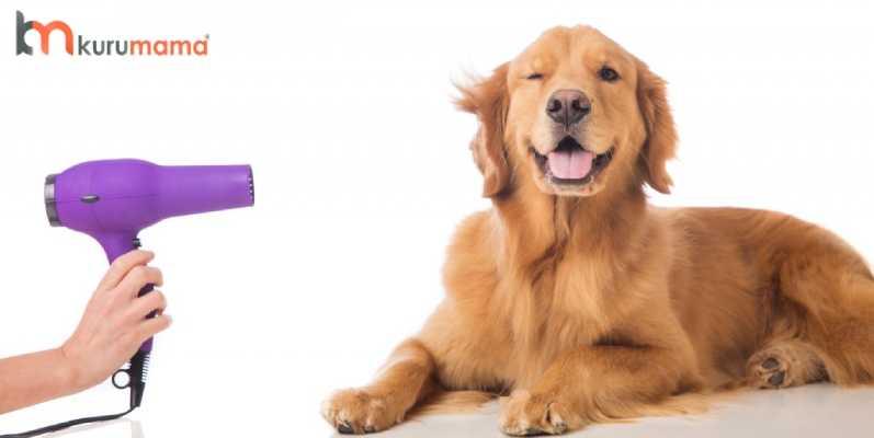 köpek kokusu