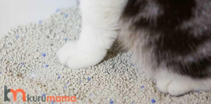 iz bırakmayan kedi kumu
