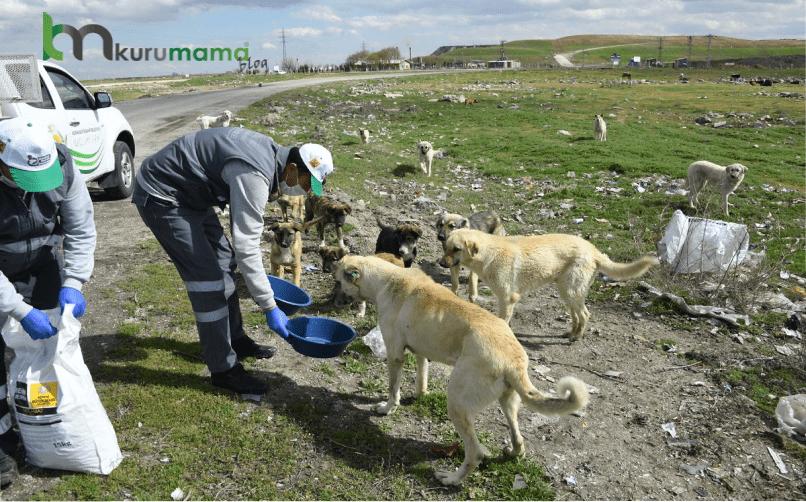 Sokakta Beslenen Köpekler