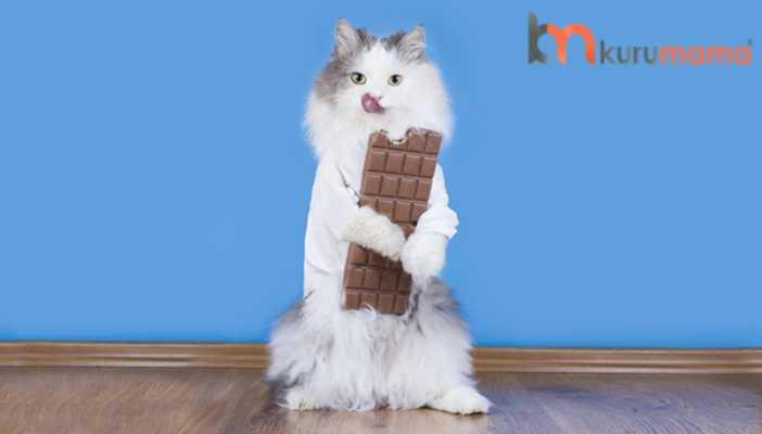 kediler çikolata yiyebilir mi