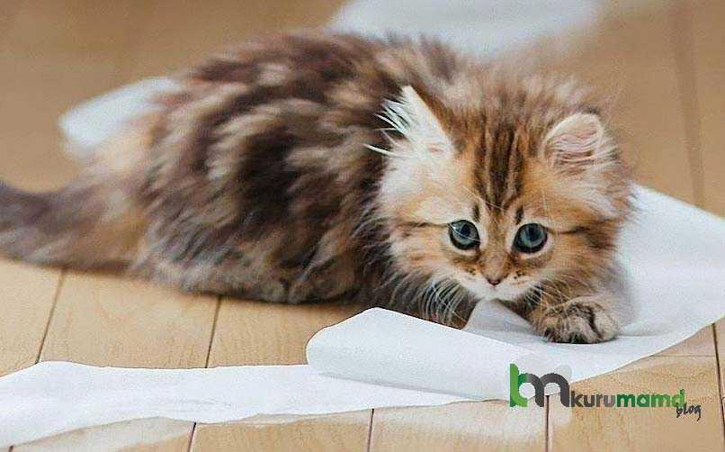 Kedi Otu - Catnip Kullanmak