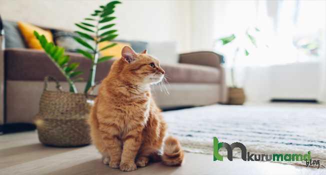 Kediler Eve Nasıl Alışır