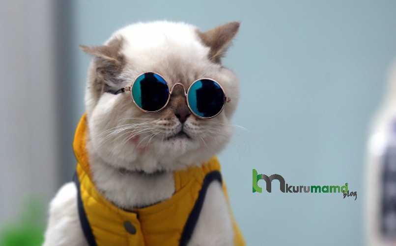 Kediler Neden Kedi Tünelini İle Oynamayı Sever?