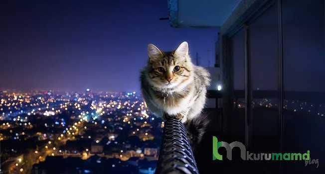 Kediniz Yeni Çevresine Nasıl Alışır