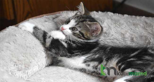 Kedinizin Eski Evine Geri Dönme İsteğini Nasıl Önleyebiliriz
