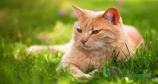 Kedileri Sosyalleştirmenin 10 Etkili Yolu