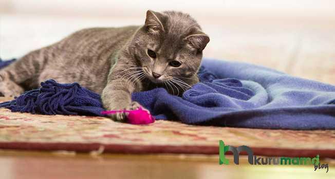 Kediniz Yeni Bir Eve Nasıl Alışır