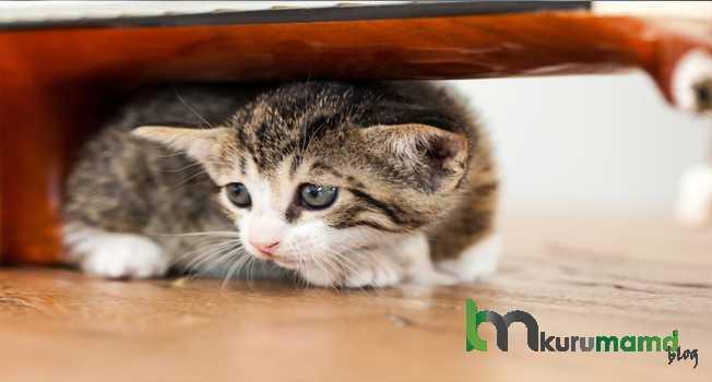 Kedinizin Yeni Evinde Uyku Düzeni Nasıl Olmalıdır
